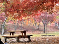 [포토] 남이섬으로 떠난 가을 여행